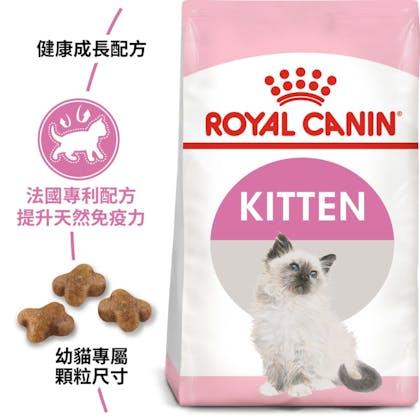 FHNKitten_Kitten