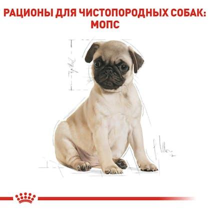 RC-BHN-PuppyPug_5-RU.jpg