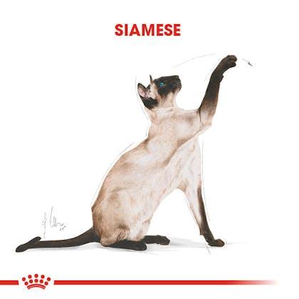 Royal Canin Siamese Adult Kedi Maması 1