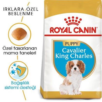Royal Canin Cavalier King Charles Puppy Yavru Köpek Maması 7