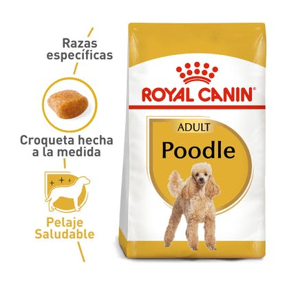 POODLE ADULT COLOMBIA 1