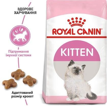 RC-FHN-Kitten_1-UA.jpg