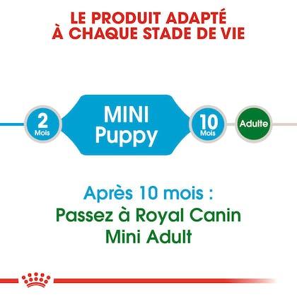 RC-SHN-Puppy-Mini-CV1_006_FRANCE-FRENCH