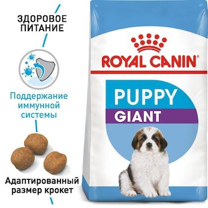 RC-SHN-PuppyGiant_1-RU.jpg