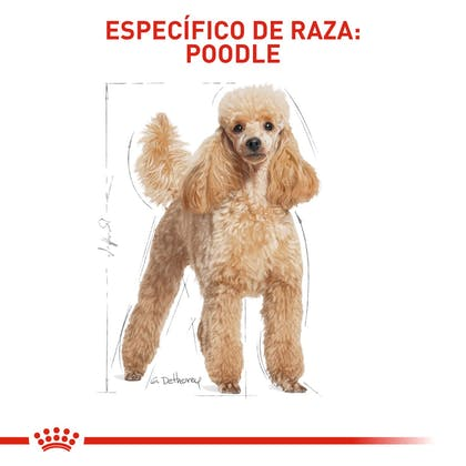 POODLE ADULT COLOMBIA 4
