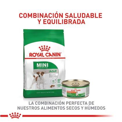 5 - MINI ADULT COLOMBIA
