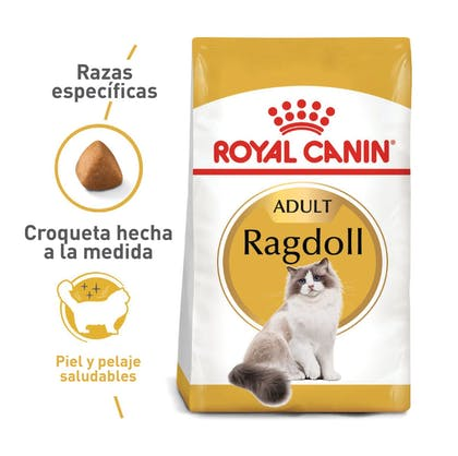 RAGDOLL ADULT COLOMBIA 1