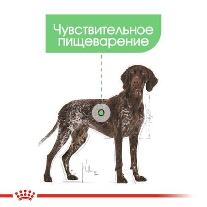RC-CCN-DigestiveMaxi-CV-Eretailkit-2_rus