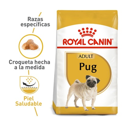 PUG ADULT COLOMBIA 1