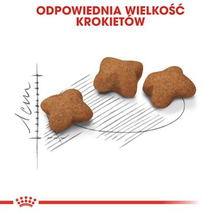 RC-FHN-KittenSterilised-CV3_002_POLAND-POLISH