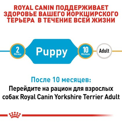 RC-BHN-PuppyYorkshire_2-RU.jpg