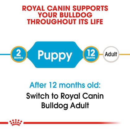 BHN-PuppyBulldog-CV-EretailKit-1