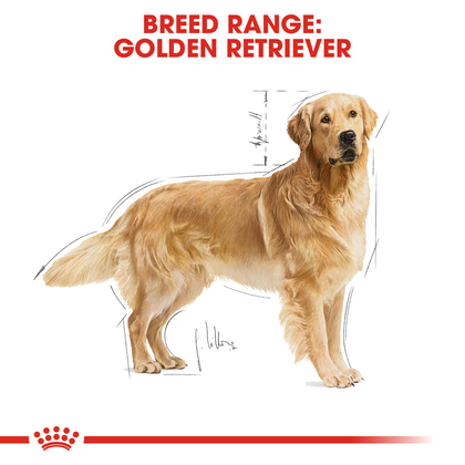BHN-GoldenRetriever-CV-Eretailkit-1