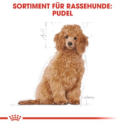 RC-BHN-PuppyPoodle-Trockennahrung_Sortiment_DE