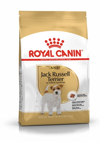 Jack Russell Adult