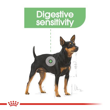 CCN-Wet-Digestive-CV-Eretailkit-1