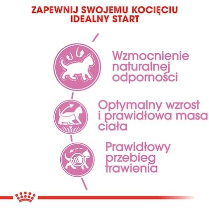 RC-FHN-KittenSterilised-CV2-cat_005_POLAND-POLISH