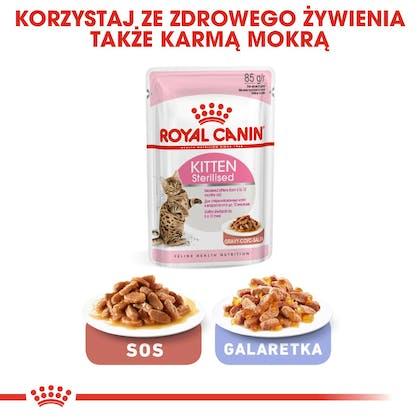 RC-FHN-KittenSterilised-CV6_001_POLAND-POLISH