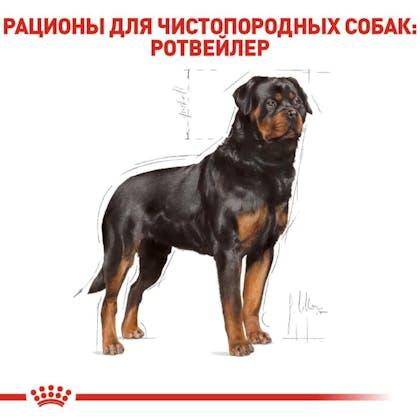 RC-BHN-Rottweiler_2-RU.jpg