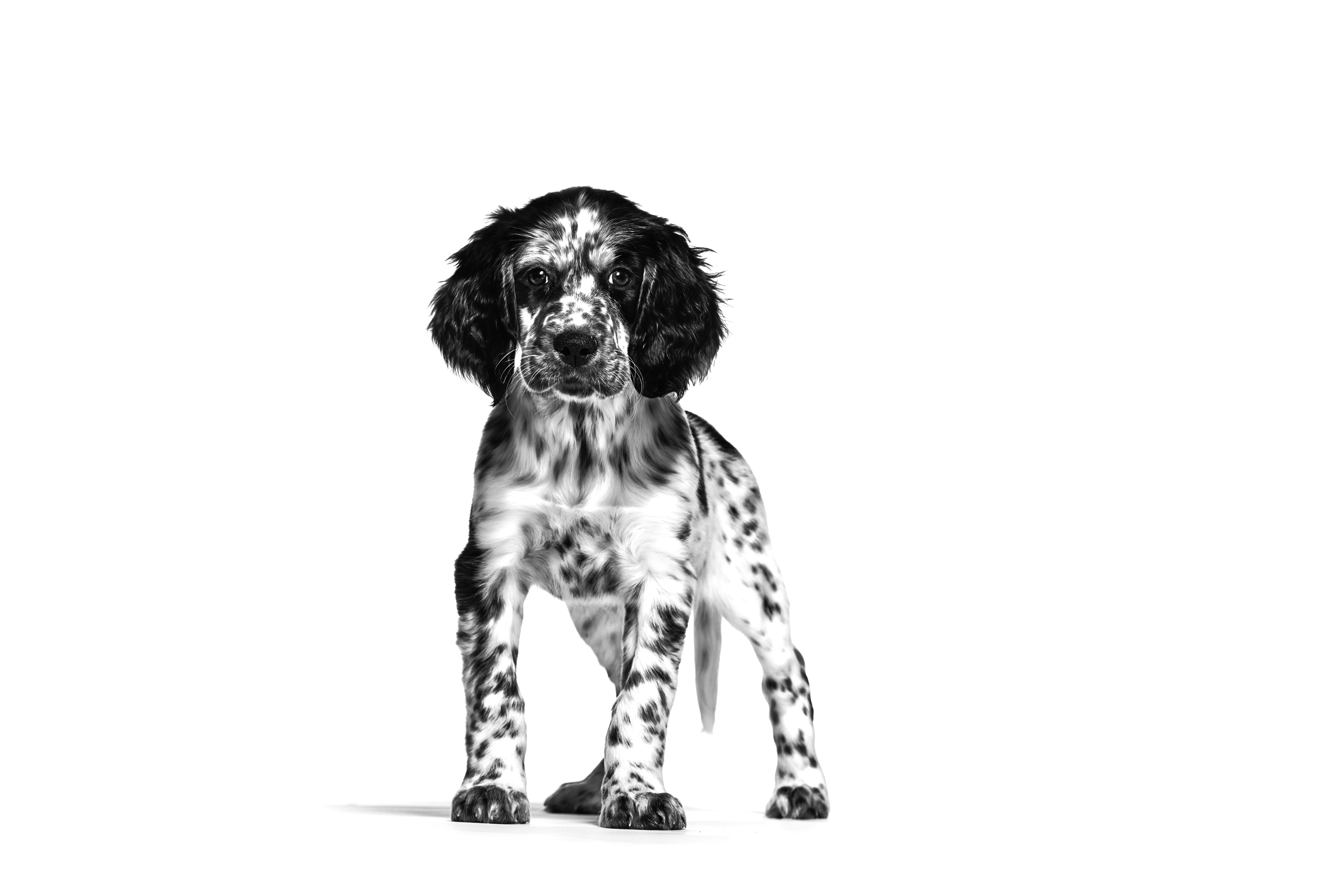 Frequently Asked Questions - Royal Canin