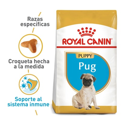 PUG PUPPY COLOMBIA 1